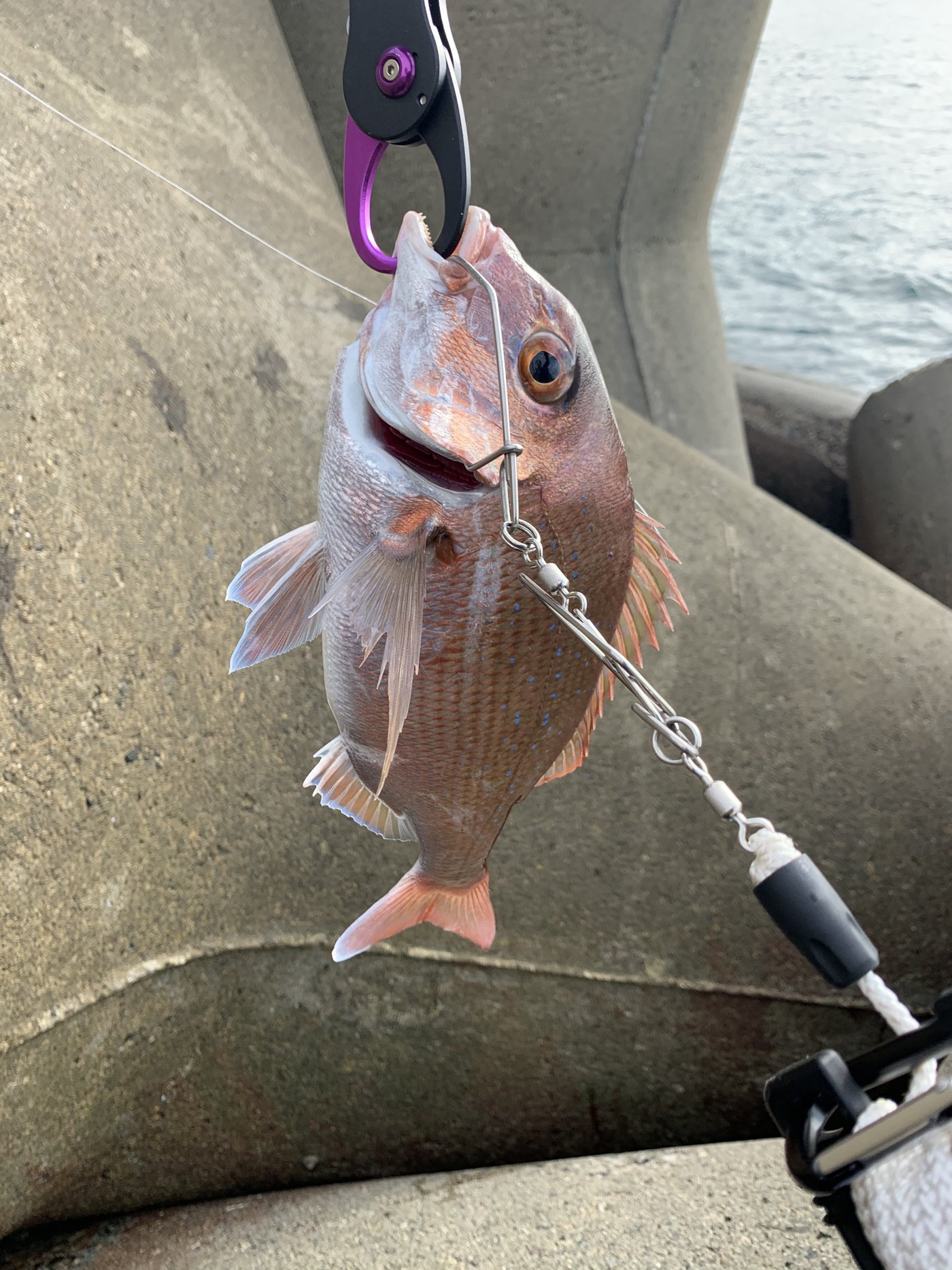 将博さんの投稿画像,写っている魚はマダイ