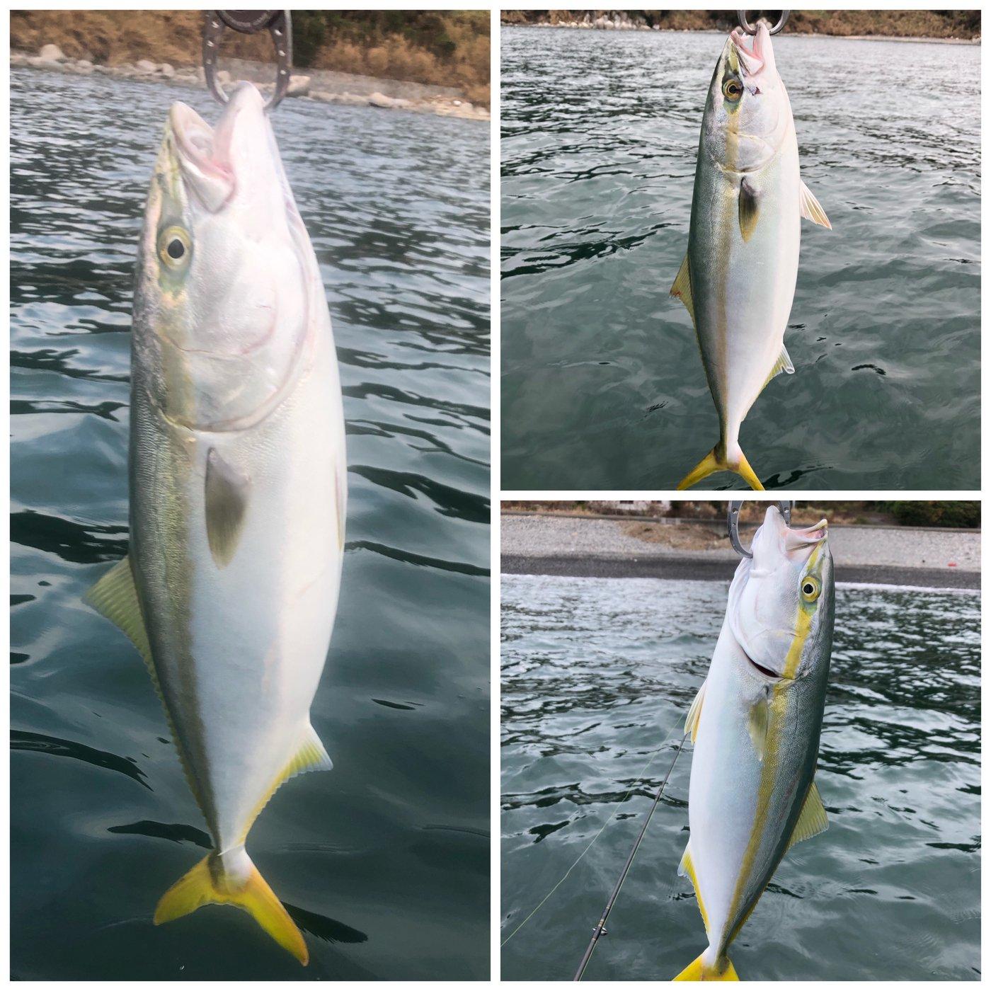 ザッキーさんの投稿画像,写っている魚はブリ