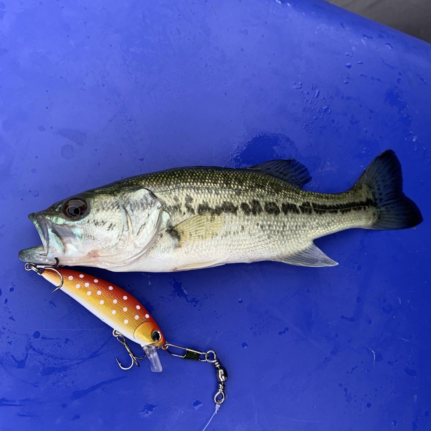 龍龍さんの投稿画像,写っている魚はブラックバス