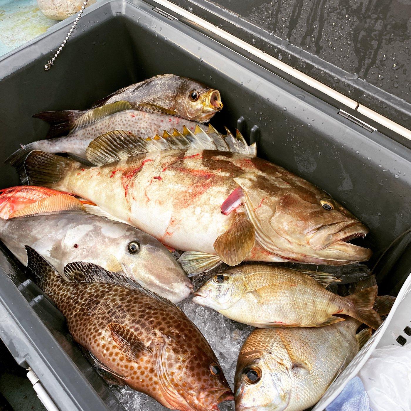 yamさんの投稿画像,写っている魚はオオモンハタ,クエ,ウスバハギ,メイチダイ,イサキ
