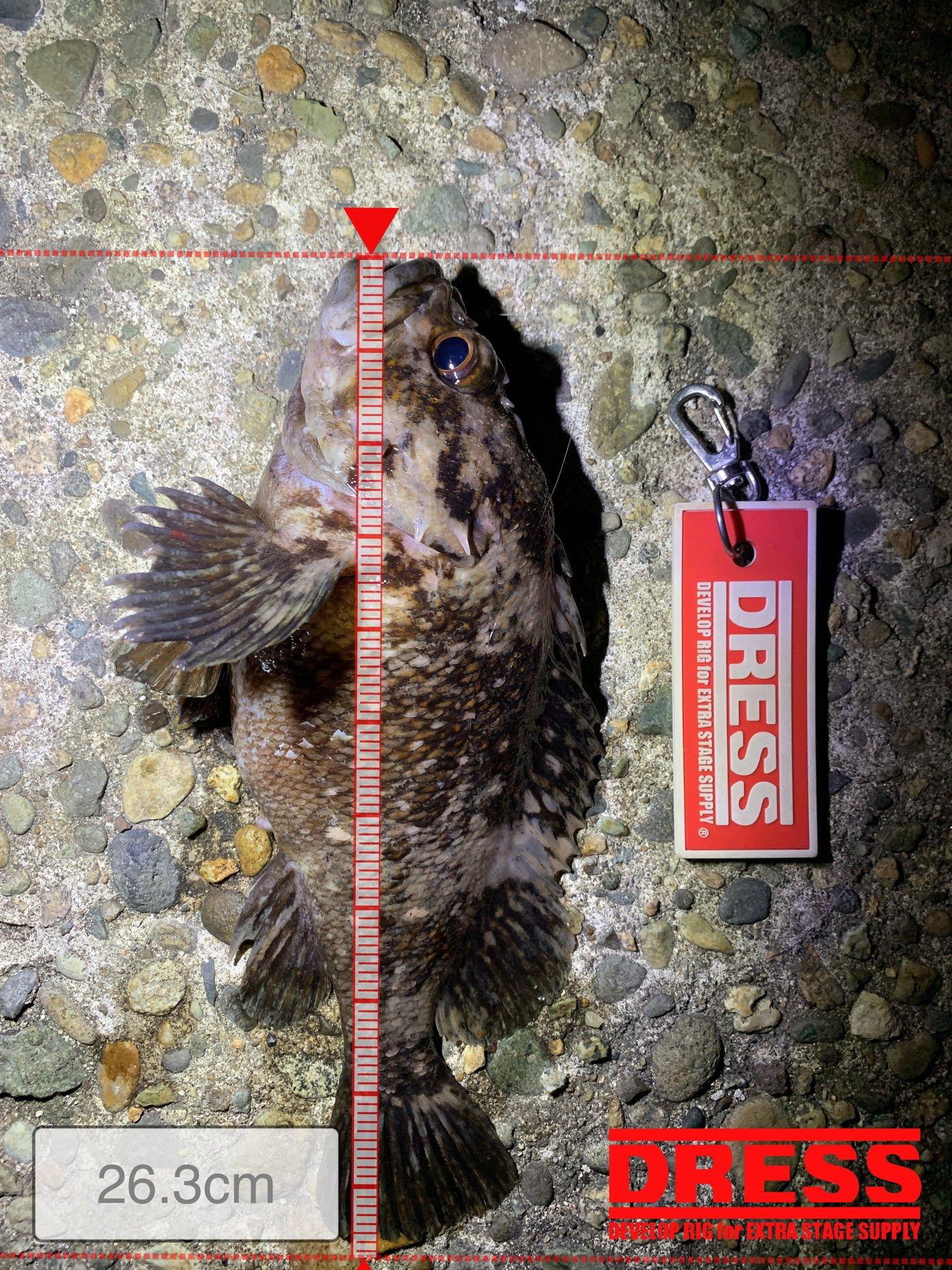 つりぴょんさんの投稿画像,写っている魚はムラソイ