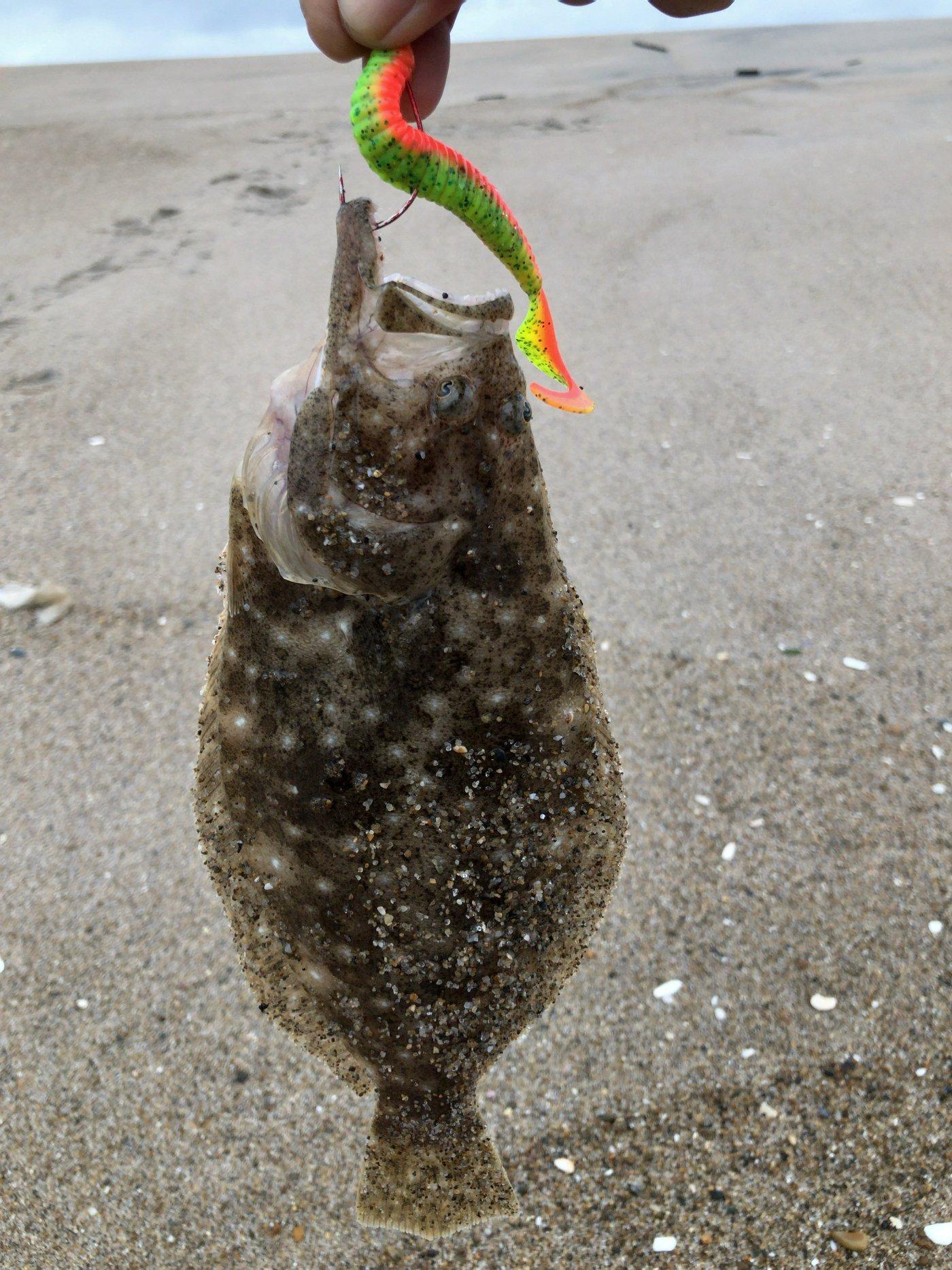 吉田のユージさんの投稿画像,写っている魚はヒラメ