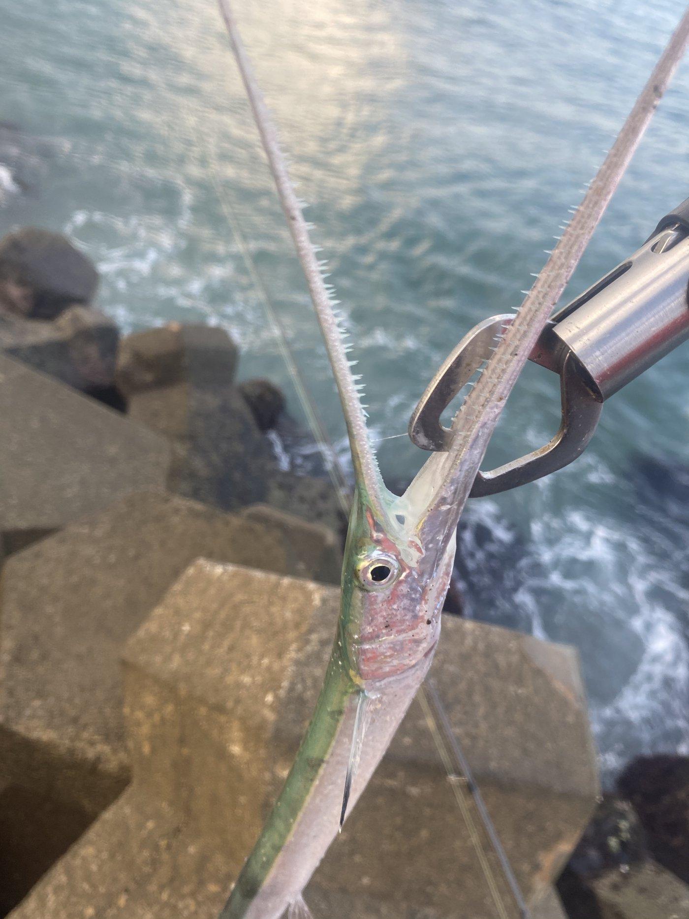 CQCQさんの投稿画像,写っている魚はダツ