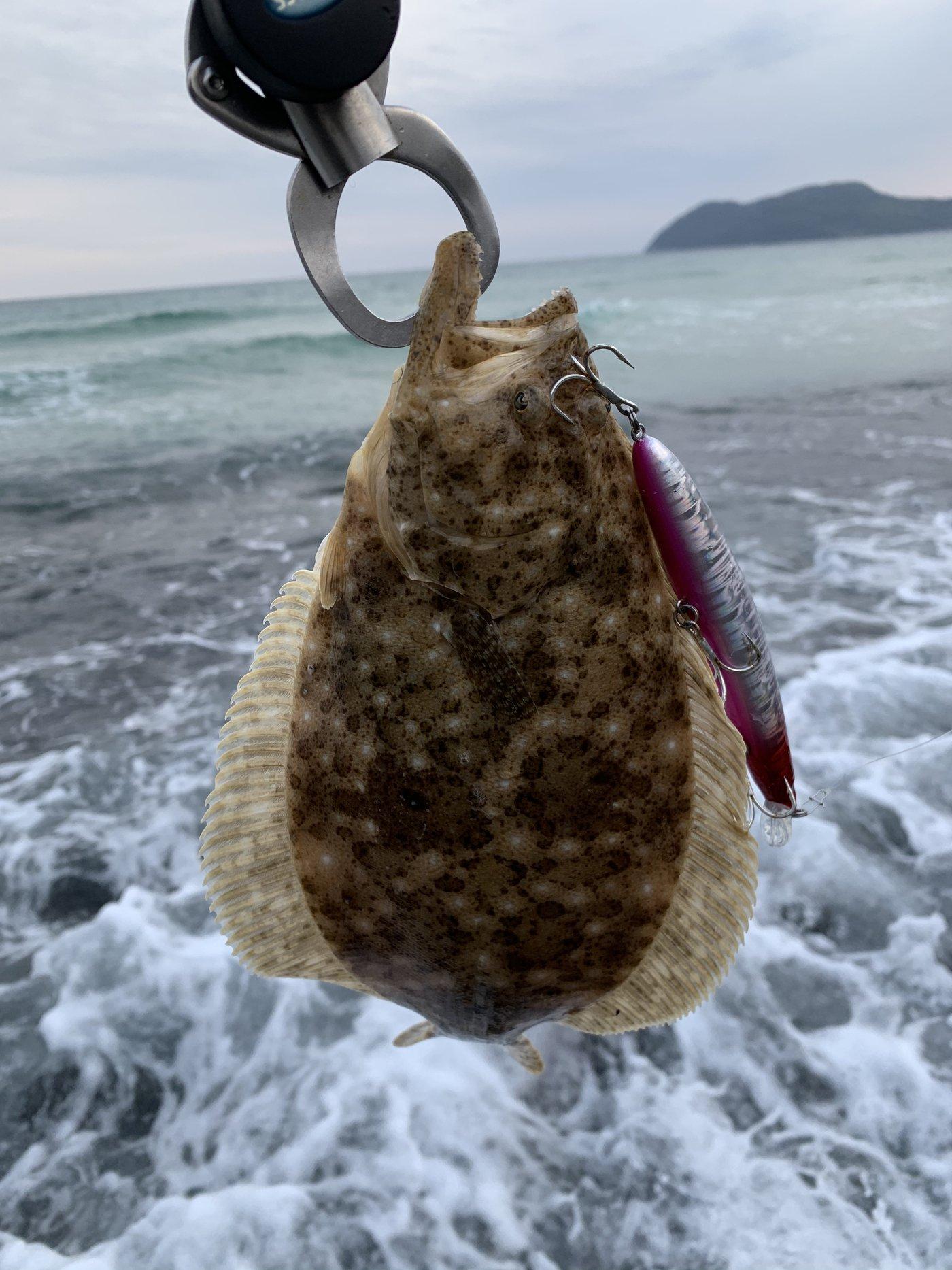 ミータさんの投稿画像,写っている魚はヒラメ