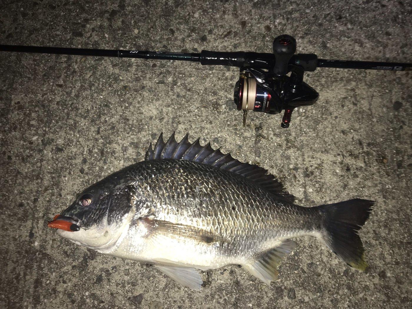 オカラバー12さんの投稿画像,写っている魚はキチヌ