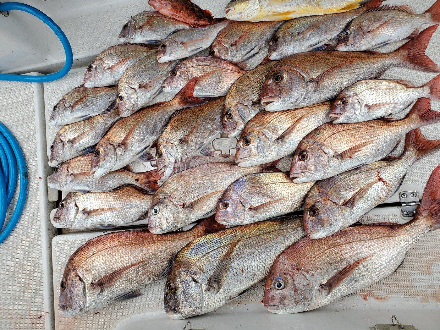 ゴーンさんの投稿画像,写っている魚は