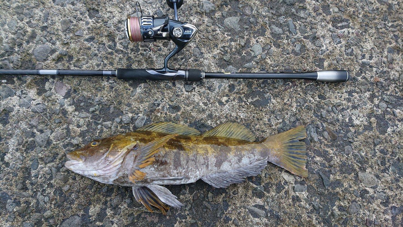 マダオさんの投稿画像,写っている魚はアイナメ